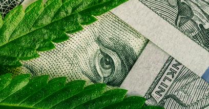 Marijuana's Swoon Before the Boom